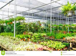 plant nursery royalty free stock images image 35884679