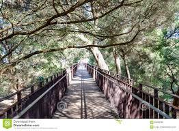 Kings Park Botanic Garden by King U0027s Park Elevated Walkway Stock Photo Image 69036399