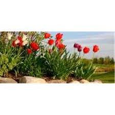 get your flower bed ready for spring shedsfirst