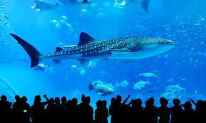 japanese aquarium the 7 best aquariums in japan japan rail pass blog
