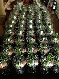 wine glass terrariums hayden blest
