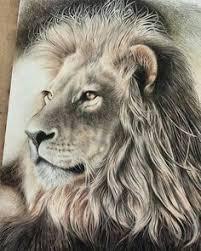 leonardo year 7 pinterest lions animal and drawings