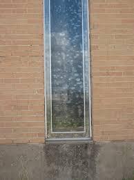 tan brick warehouse wall glass window grunge texture for me