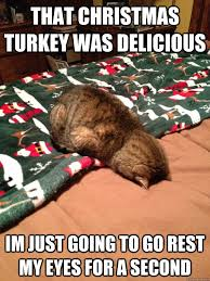 Funny Christmas Cat Memes - tired cat memes image memes at relatably com
