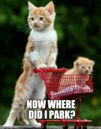 Kitty Cat Memes - image tagged in kitty cat cart memes cat imgflip