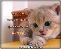 imagenes de gatitos sin frases imagenes de gatitos tristes para facebook tiernas imagenes para
