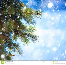 tree branch and snow fall royalty free stock image
