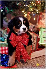 dog christmas 20 well dressed dogs ready for christmas fallinpets