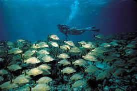 Florida snorkeling images Florida keys diving snorkeling monroe county florida keys jpg