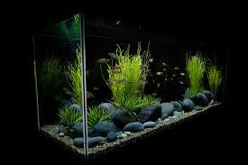 interesting design of the large modern fish tank that used stone