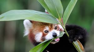 native plants in china bamboo san diego zoo animals u0026 plants