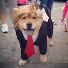 cool costume ideas cool dog costume ideas for 56 pics picture 42