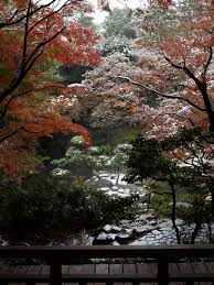 November Tokyo by Autumn Snow In Tokyo In November Japan Guide