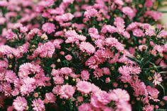 163 beautiful types of flowers a to z with pictures planting