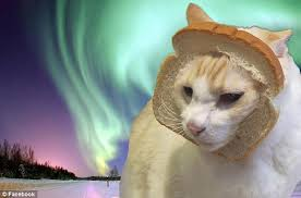 Cat In Bread Meme - has the internet completely lost it dressing up cats with bread is