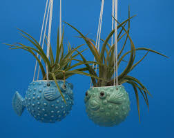 small hanging puffer fish planters air plants succulents