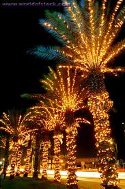 palm trees lights it s beginning to look a lot like