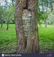 tree repair surgeon damage sealed to protect tree stock photo