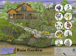 native garden plants new rain garden poster and presentation