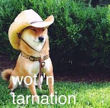 Shiba Meme - you will either love or hate the new what in tarnation meme