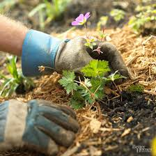 How To Mulch Flower Beds All About Garden Mulches