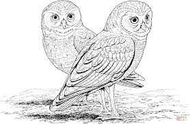 burrowing owl coloring page free printable coloring pages