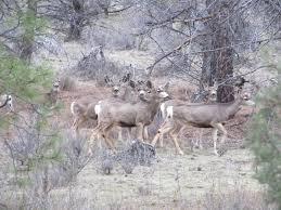 Oregon wildlife tours images Mule deer oregon guided tours jpg