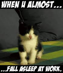 Sleepy Kitty Meme - nice sleepy kitty meme these cats are us on mondays meows and purrs