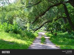 forest glade with sloping branches of trees and road trodden stock