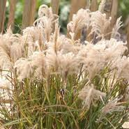 the flower factory nursery ornamental grass
