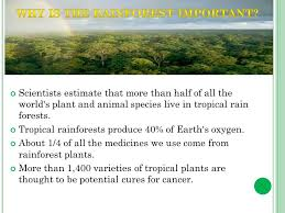 Adaptations Of Tropical Rainforest Plants - w here are they almost all rain forests lie near the equator