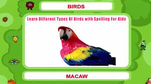 learn different types of birds with spelling for kids youtube
