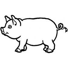 mini pig kid u0027s corner mini pig info