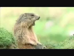 Allan Meme - funny squirrel allan allan allan steve steve steve youtube