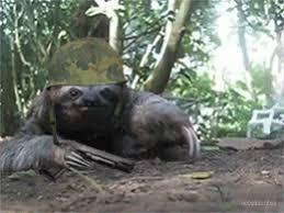 Angry Sloth Meme - angry tsundere gif 10 gif images download
