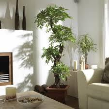 home decor plants home decor plants living room gallery of home decor plants living