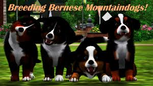 sims 3 australian shepherd breeding bernese mountain dogs kennel angelpaws sims 3 pets