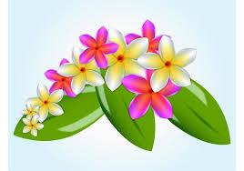 plumeria flower plumeria flower free vector 8663 free downloads