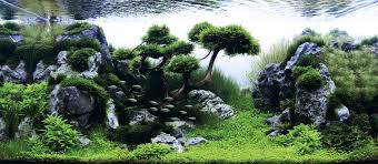 hardscape with crystalwort trees aquascape design 1 pinterest