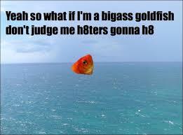 Funny Fish Memes - tropical fish memes on twitter funny fish goldfish humor