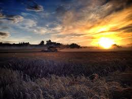 new holland wheat harvest in alberta harvest pinterest