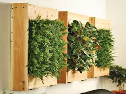 living diy living wall systems indoor living wall planter