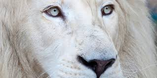 why we are inviting walter palmer into our lions u0027 protected area