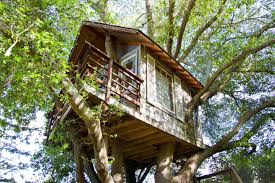 treehouse above san francisco bay treehouses for rent in