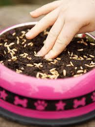 how to grow pet grass hgtv