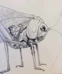 drawing katydid st luke u0027s attic