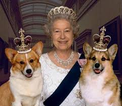 queen elizabeth dog 17 ways to tell corgis are the right dogs for you corgis queens