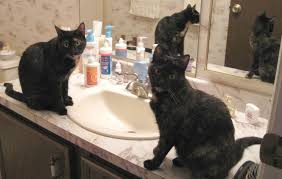 Cat Under Faucet What Is It About Cats And Sinks