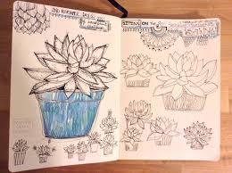 succulents u2013 amanda claire designs