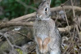 rabbit wild love photography
